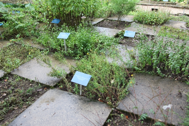 Abbaye d 39 orval - Pharmacie du jardin des plantes ...